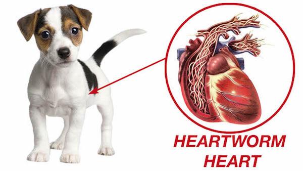 Orchard Park Veterinary Medical Center Heartworm Preventative